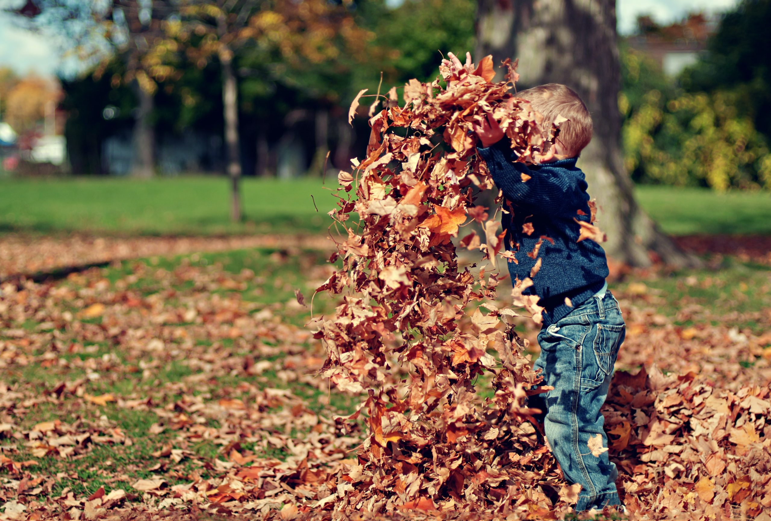 boy-playing-with-fall-leaves-outdoors-36965